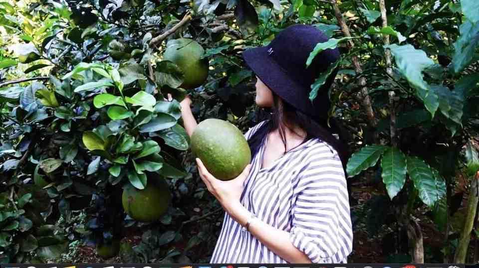 Bưởi da xanh hái tại vườn nhà Lê 1kg (ngọt - mọng nước - không sượng)